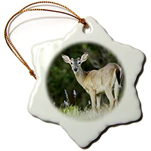 3dRose orn_84376_1 White-tailed Deer, Buck, Hill Country, Texas NA02 RNU0312 Rolf Nussbaumer Snowflake Porcelain Ornament, 3-Inch