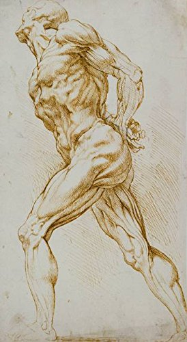 Wall Art Print entitled Anatomical Study: A Nude Striding To The Right, Hi by The Fine Art Masters