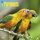 Parakeets 2015 Calendar