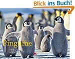 Pinguine 2015