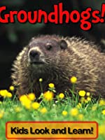 Groundhogs! Learn About Groundhogs and Enjoy Colorful Pictures - Look and Learn! (50+ Photos of Groundhogs) (English Edition)