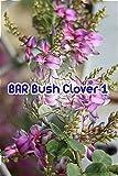 BAR Bush Cloverの日常 第1巻