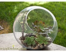 Large Terrarium Bubble Bowl