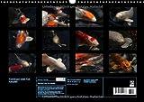 Image de Nishikigoi oder Koi Karpfen (Wandkalender 2015 DIN A3 quer): Nishikigoi oder einfacher