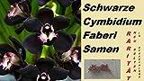 10x Schwarze Cymbidium Faberi Samen Orchidee Blumensamen Pflanze Neu Selten #216