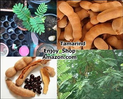 10 Tamarind Seeds Sweet