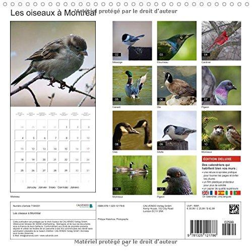 Les Oiseaux a Montreal Calendrier Mural 2016 300 300 Mm Square (Calvendo Places)