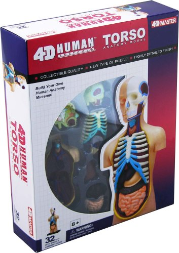4D Vision Human Anatomy Torso Model (Pancreas Model compare prices)