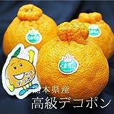 【産地直送】熊本県産 高級 デコポン 化粧箱入り 熊本が誇る至極の柑橘、本物のデコポン!!