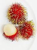 ランブータン Thai Rambutan Nephelium lappaceum 10 Seeds ThailandMrk