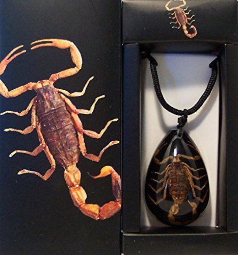 Real Brown Scorpion Large Teardrop Necklace (Black Background)