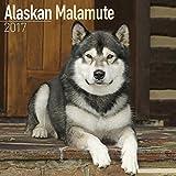 Alaskan Malamute Calendar 2017 - Dog Breed Calendar - Wall Calendar 2016-2017