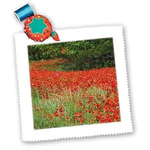 qs_93169_2 Danita Delimont - Flowers - Poppy flowers, North Carolina - US34 AJE0044 - Adam Jones - Quilt Squares - 6x6 inch quilt square
