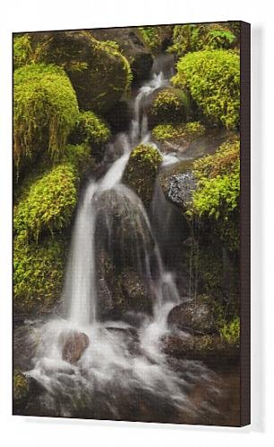 canvas-print-of-usa-washington-olympic-national-park-creek-in-sol-duc-valley