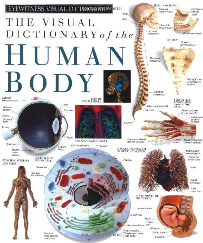 Human Body (DK Visual Dictionaries)