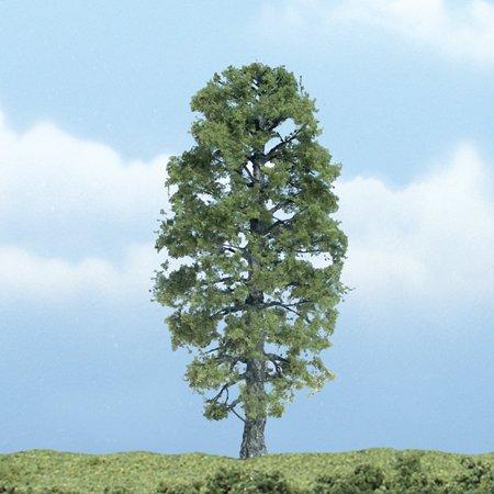 Premium Basswood Tree, 4