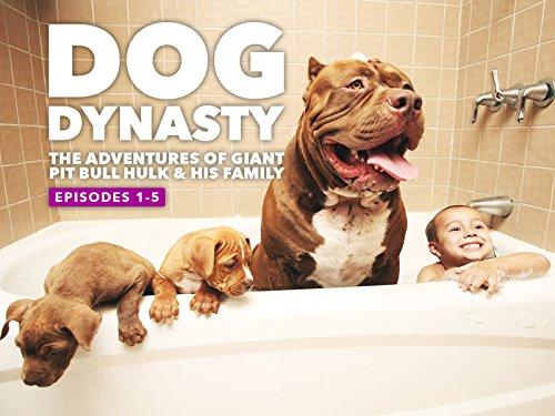 Dog Dynasty - Season 1