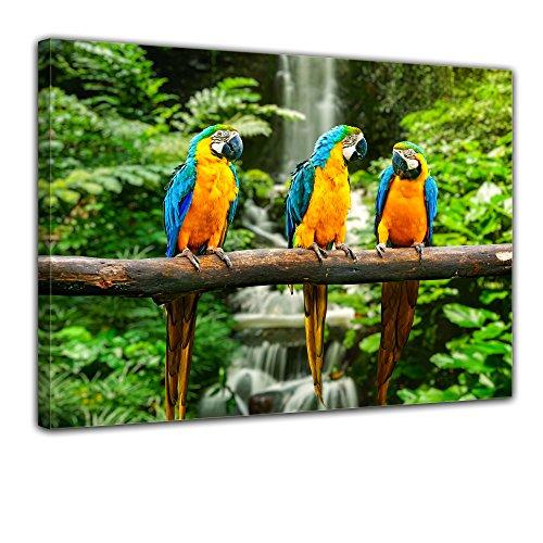 """Bilderdepot24 Leinwandbild """"Blau-Gelber Macaw Papagei"""" - 70x50 cm 1 teilig - fertig gerahmt, direkt vom Hersteller"""