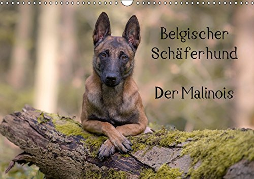 belgischer sch ferhund der malinois wandkalender 2017 din a3 quer die facetten einer. Black Bedroom Furniture Sets. Home Design Ideas
