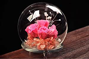 Amazon.com : Bloss Decorative Glass Globe Tabletop Air Plant Terrarium