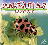 Mariquitas/Ladybugs (Insects Discovery Library (Bilingual)) (Spanish Edition)