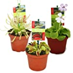 Starter Set Fleischfressende Pflanzen...