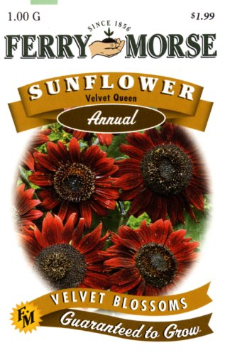 Ferry-Morse Annual Flower Seeds 1602 Sunflower - Velvet Queen 1 Gram Packet
