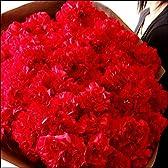 母の日 ギフト 母の日限定!極上のカーネーション100本の花束!【お届け日:5/9~5/12】【パラボッセ】