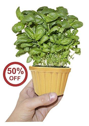 planters-cyber-monday-sale-deals-2016-cute-mini-planter-souvnear-ceramic-yellow-planter-pot-with-dra