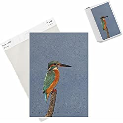 Photo Jigsaw Puzzle of Common Kingfisher - female on perch