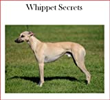 Whippet Temperament | RM.