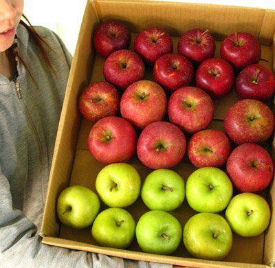 訳ありリンゴ大集合!お楽しみ福袋5kg詰
