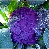 Purple Cauliflower 40 Seeds -LOW CARB!- Veggie