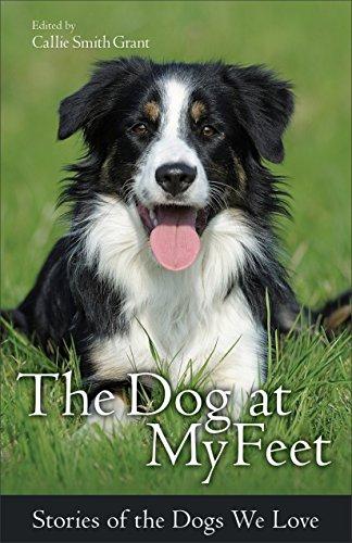 El perro a mis pies: las historias de los perros nos encanta