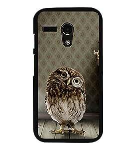 Owl 2D Hard Polycarbonate Designer Back Case Cover for Motorola Moto G :: Motorola Moto G (1St Gen)