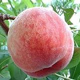 桃の本場山梨 夏の香り桃 産地直送美味しい桃2kg 極上大玉桃 旬の桃品種で大きさが違うだけの訳あり ランキングお取り寄せ