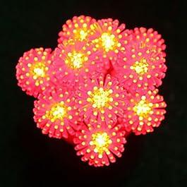 Ch&Ch38-LED String Festival lampada per Natale Decorazione di Natale festa di nozze