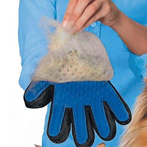 Hommii gant pour poils d 39 animaux magic animal gant de massage chien chat fourrure 12 99 - Gant pour enlever poils chat ...