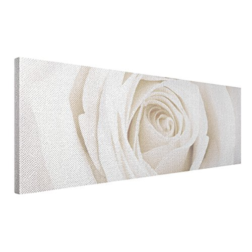 apalis rosen leinwandbild pretty white rose 120x40cm blumenbild gr e 40cm x 120cm. Black Bedroom Furniture Sets. Home Design Ideas