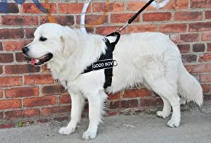 DT Universal No Pull Dog Harness, Good Boy, Black, X-Small, Fits Girth Size: 21-Inch to 25-Inch