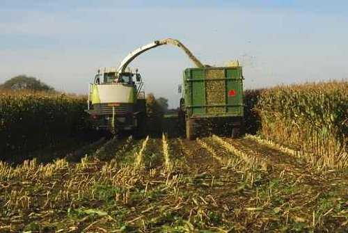 Sky Wall Decals Silage Of Maize Crop On Farm In The Uk - 36 Inches X 24 Inches - Peel And Stick Removable Graphic front-805436