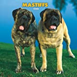 Mastiffs 2008 Square Wall