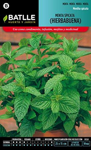 semillas-batlle-097326bols-menta-spicata