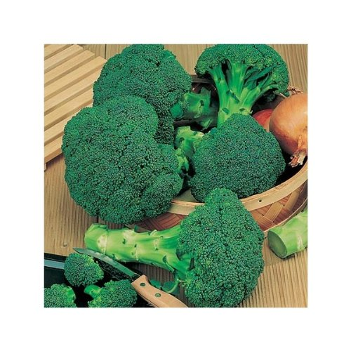 Semi Premier diretto ORG 176 Broccoli verdi semi germinali organici (Pack of 1000)