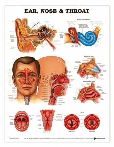 zoom image dumbbell poster upper body price $ 23 94