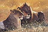 Lions in the Sun 1000 Piece Puzzle at Amazon.com