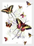 Lama Kasso 406-T Rainbow Colored Butterflies on a White Background Satin Throw 48-Inch by 63-Inch