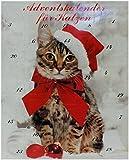 Adventskalender/Weihnachtskalender für Katzen - Katzenadventskalender