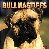 Bullmastiffs 2004 Calendar