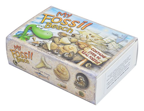 my-fossil-beach-contains-over-40-genuine-fossils